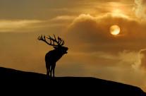 Cervo al tramonto