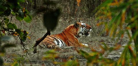 India selvaggia – Ultimi paradisi naturali d'Asia