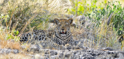 Incanto d'Africa: Namibia a cura di Gianni Giatti – 6 novembre 2013