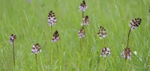 Pic Photo Trek a Monte Sole – Speciale orchidee selvatiche – Domenica 18 maggio 2014