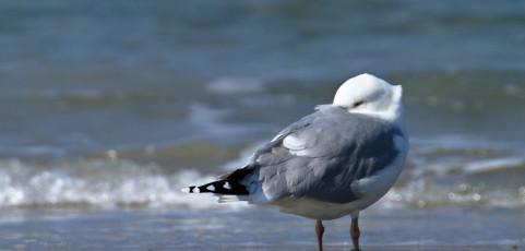 Inanellamento degli uccelli e migrazione – 11 giugno 2014