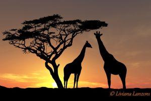 2011 Sud Africa tramonto