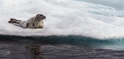 Natura estrema, la fauna dell'Artico dalle Vesteralen alle Svalbard con Davide Palumbo – mercoledì 2 dicembre ore 21