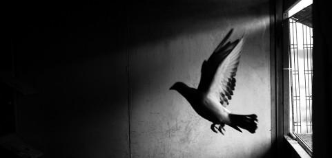 Un battito d'ali con Francesco Ruffoni – 15 giugno 2016