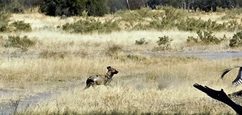 Superpredatori agli antipodi con Davide Palumbo – Mercoledì 15 febbraio 2017