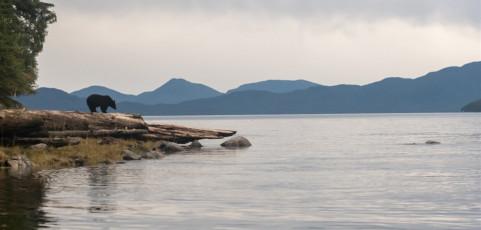 Alla ricerca dell'Orso Spirito – Presenta Max Venturi il 22 marzo ore 21